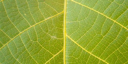tree leaf texture