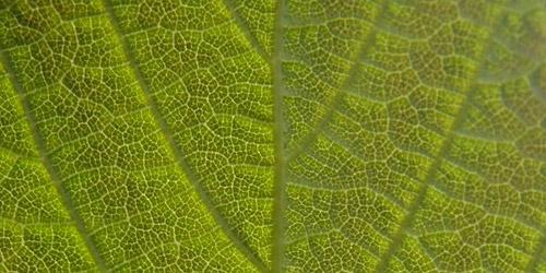 leaf textures freebie