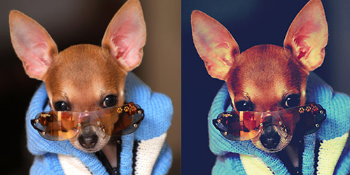 chihuahua photoshop action