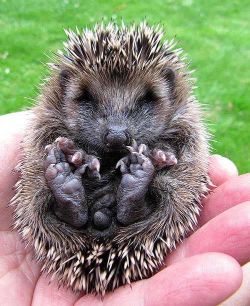 Cute Animal Photos