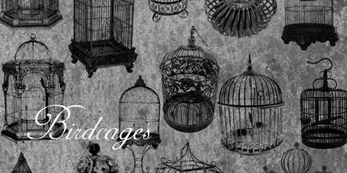 bird cages retro brushes