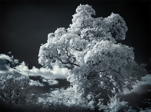 solid foam infrared photo