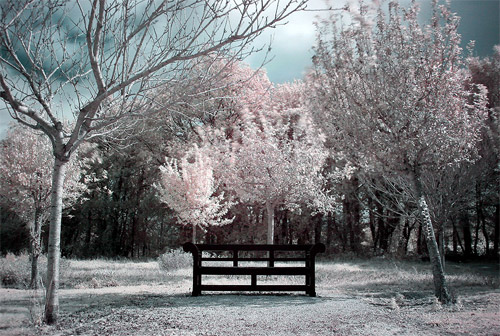 canon Infrared photography