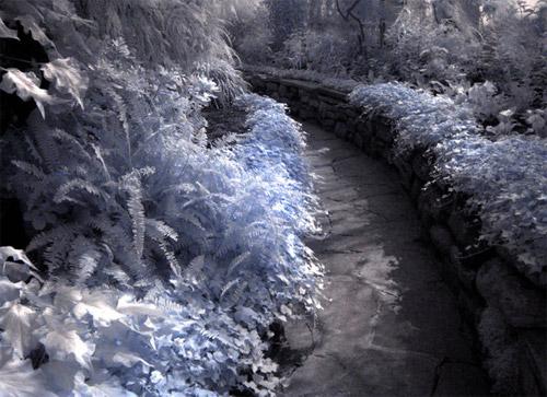 Infrared Garden Path