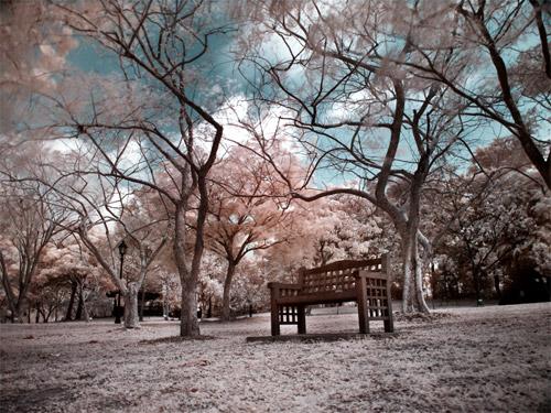 Infrared Gardens