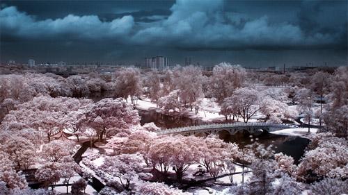 Chinese Gardens Infrared