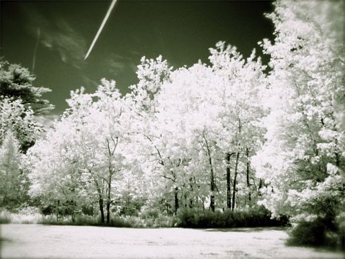 Infrared Forest Line