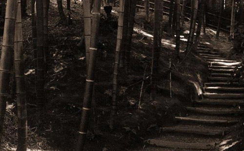 Bamboo Path iPad Wallpaper