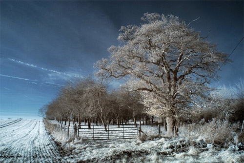 Orchard Infrared Photography