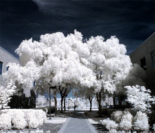 Straightforward Path Infrared