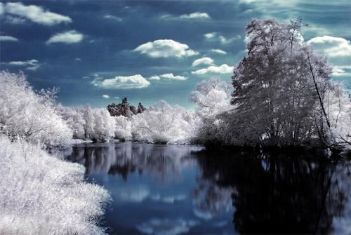 The Dark Tree Infrared