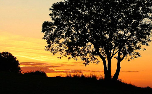 Dawn Tree iPad Wallpaper