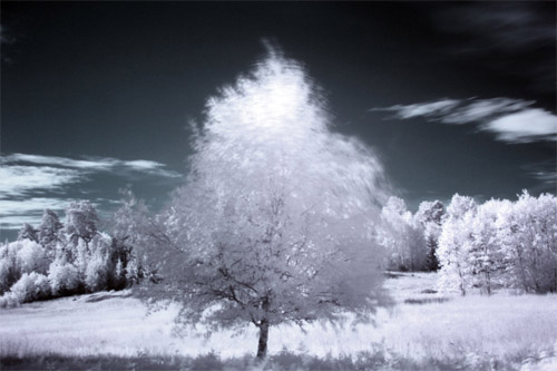 Infrared Tree standing alone
