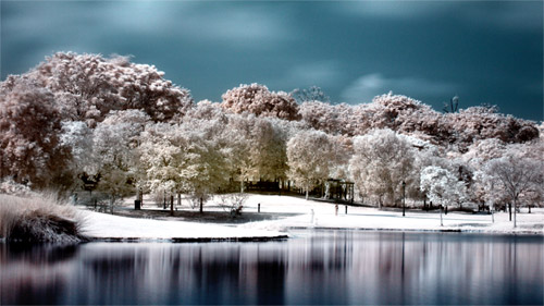 botanical gardens infrared