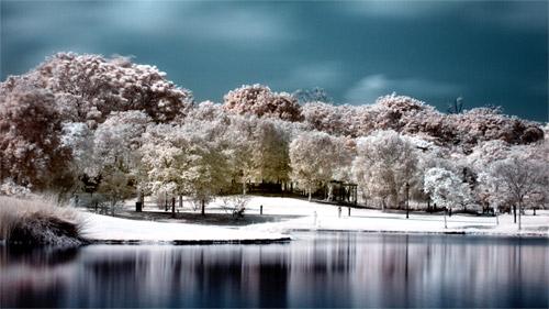 botanical gardens infrared
