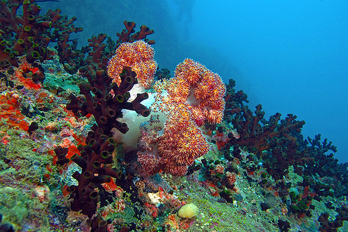 corals underwater photography