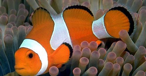 Create Sea Anemones 3d max