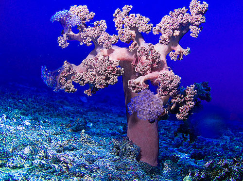 coral tree underwater photography