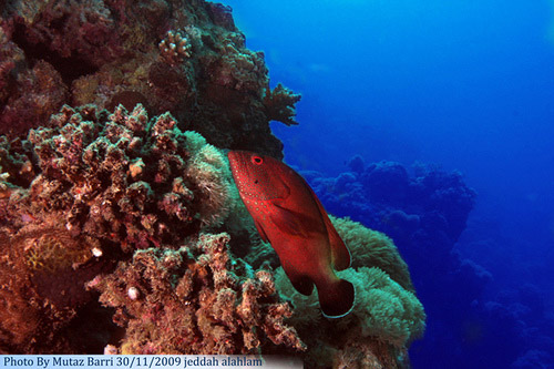 red fish underwater photography