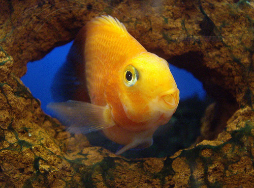 cute parrot fish photo
