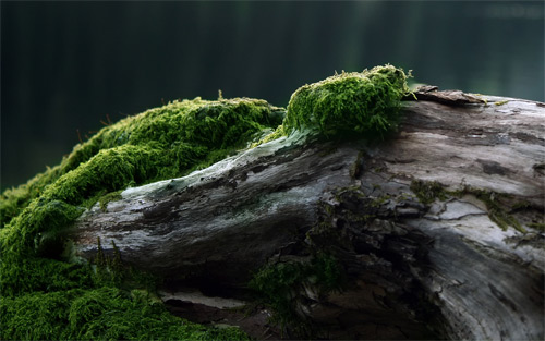 moss nature dual wallpaper