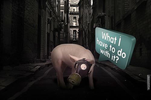 pig swine flu