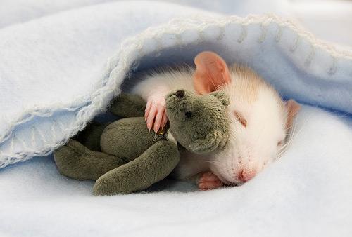mouse hug bear