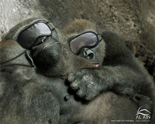 sleeping  gorillas