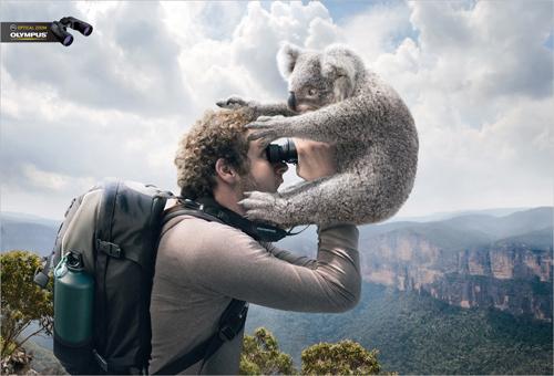 viewing koala