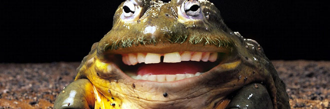 35+ Funny Animal Photo Manipulations