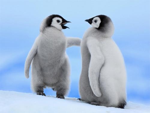 cute penguins wallpaper