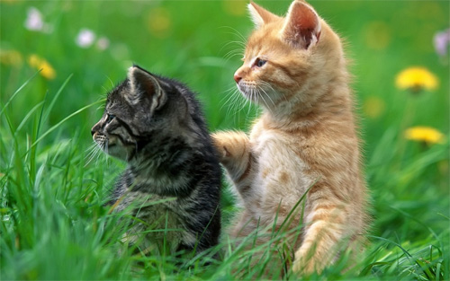 kittens cute wallpaper
