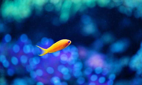 fish animal wallpaper