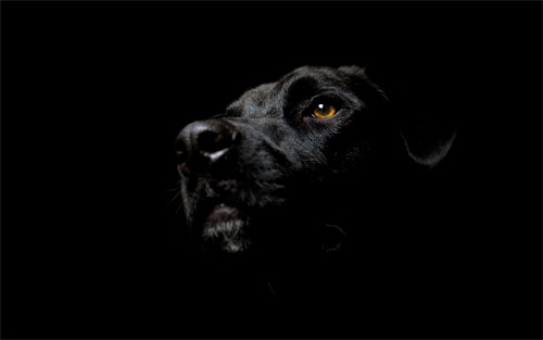 dog black 2 wallpaper