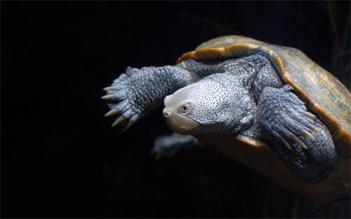 baltimore turtle wallpaper