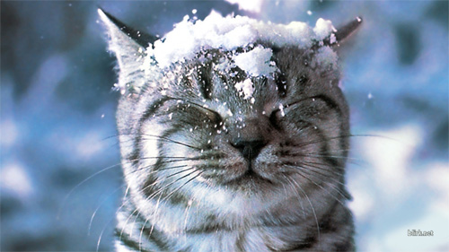 cat in snow wallpaper