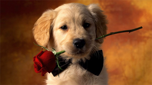 romantic puppy wallpaper
