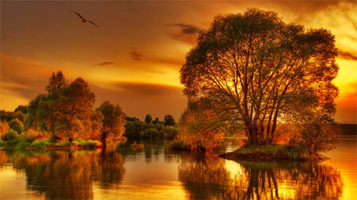 beautiful trees sunset wallpaper