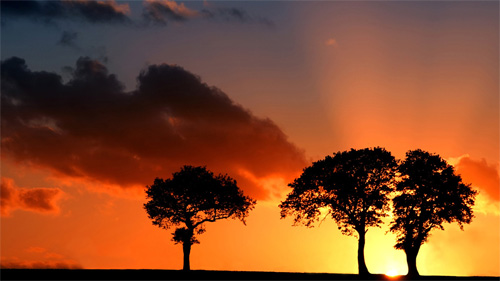 savanna tree sunset wallpaper