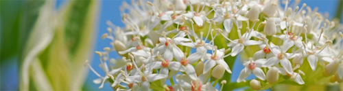white flower spring triple screen wallpaper