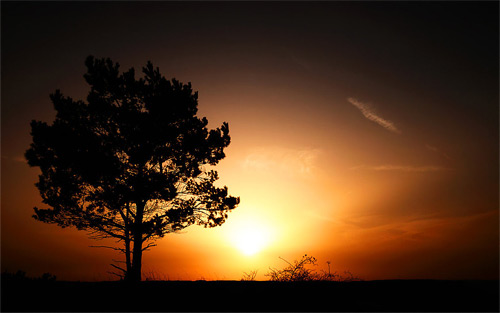 Tree sunrise wallpaper