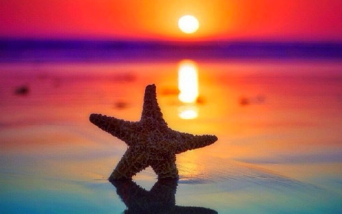 starfish sunrise wallpaper