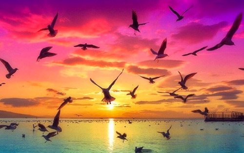 sunrise birds wallpapers