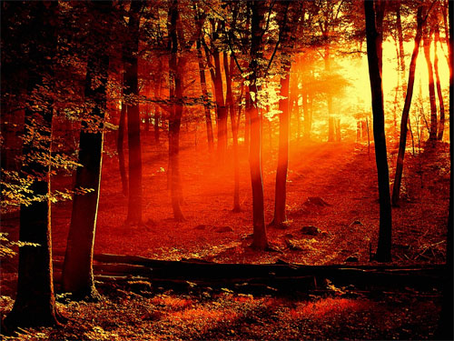 Forest sunrise sunrise wallpaper