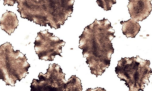 coffee stains brushes ps