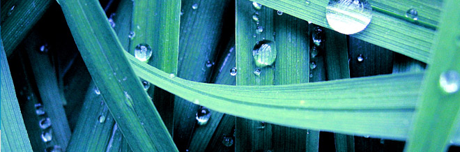 Photography Inspiration: 33 Refreshing Dew Photos