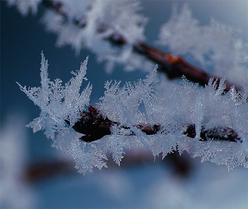 Winter Crystals
