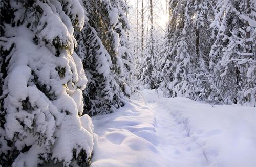 Path of Winter