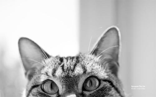 synoptyk cat