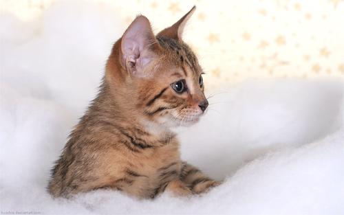 mikesch cat